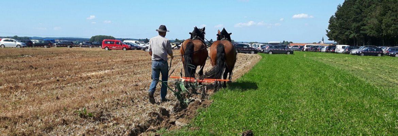 Pferde beim Pflügen