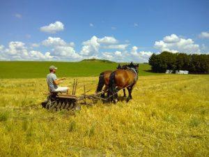 Ackerbau mit Pferden